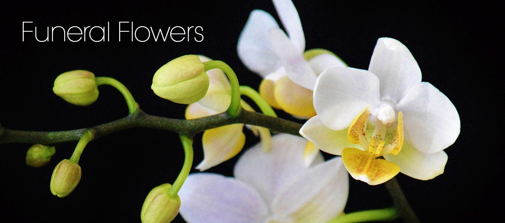 Funeral Flowers Springwood by Chatswood Hills Florist Springwood